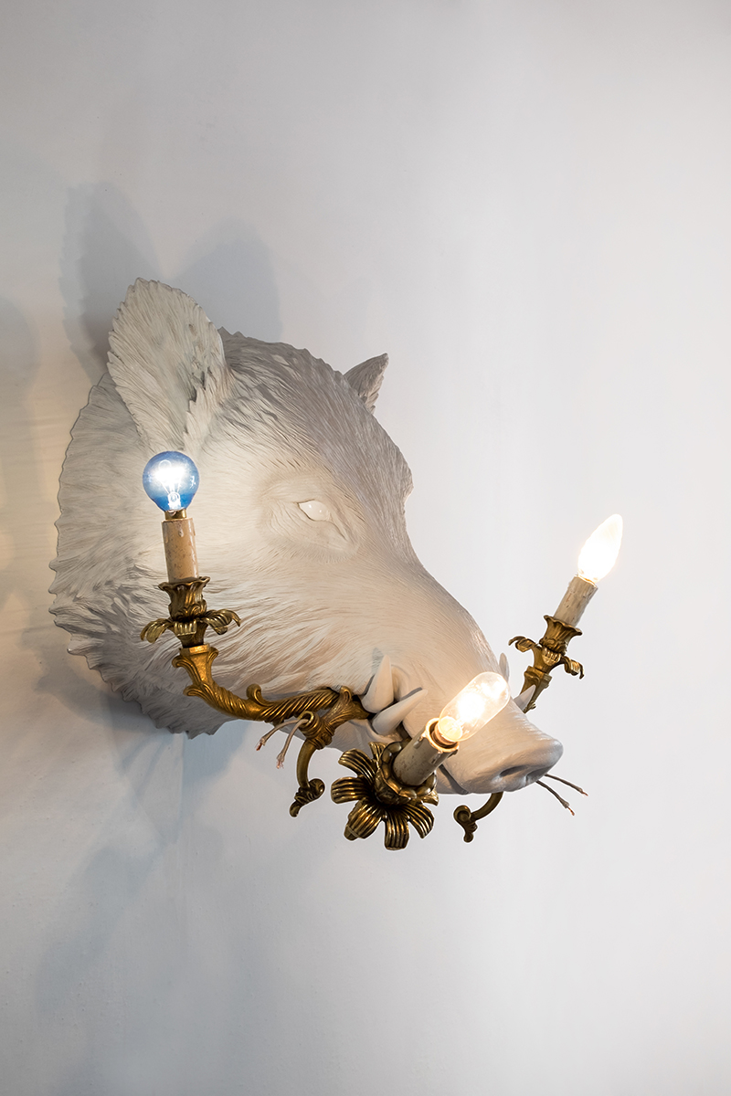 WHAT A BOAR! (BOAR WITH LAMPS)